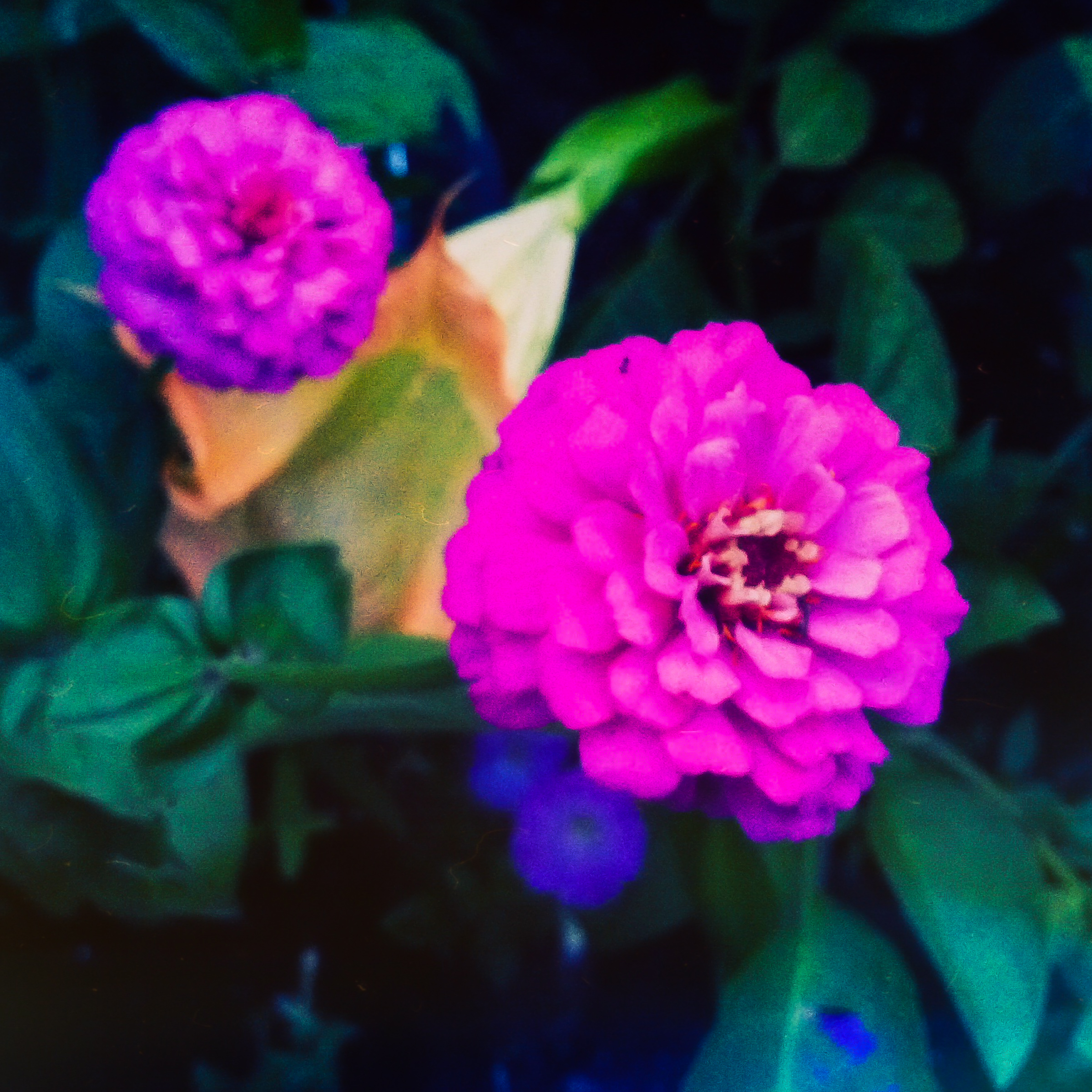 Garden Flowers-6