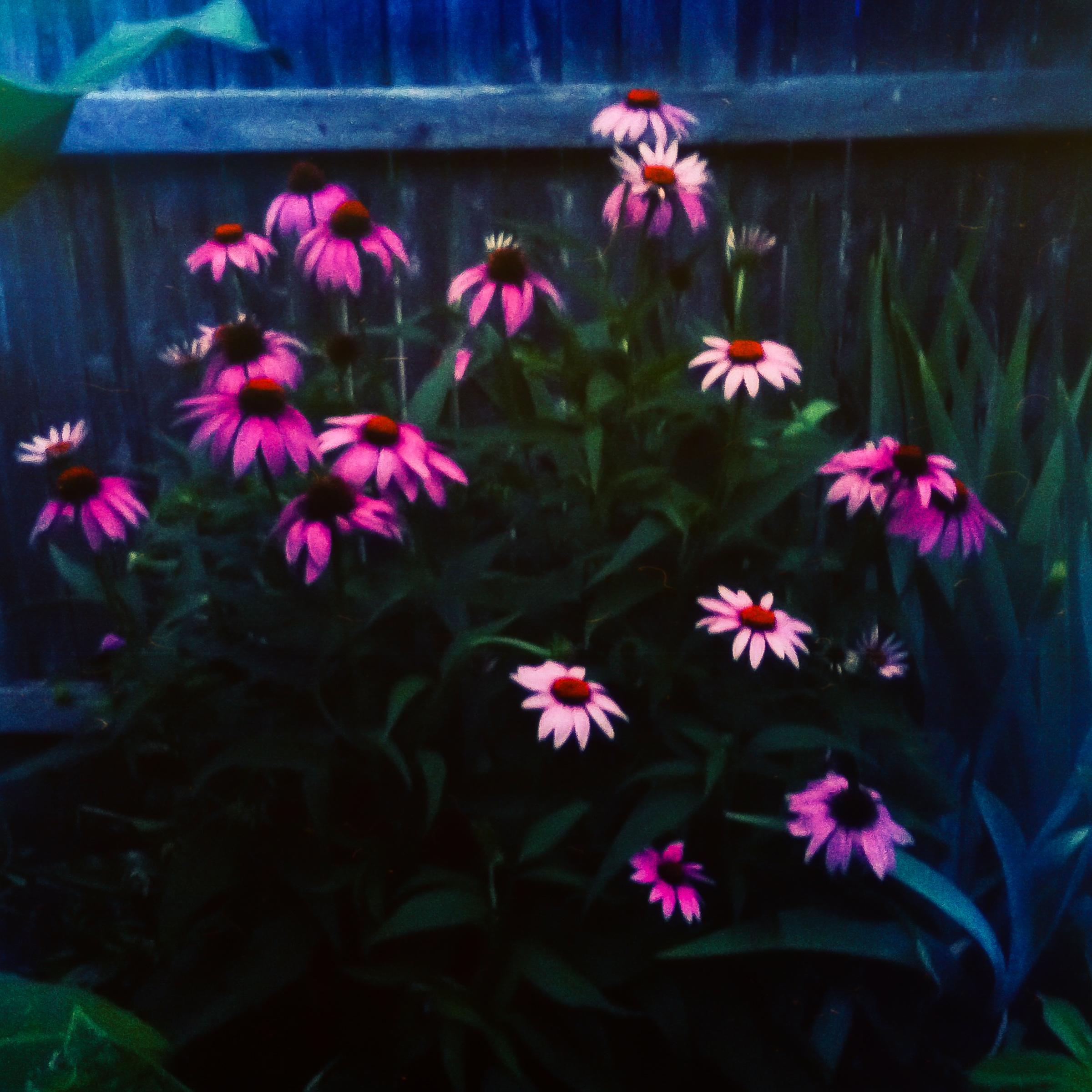 Garden Flowers-9