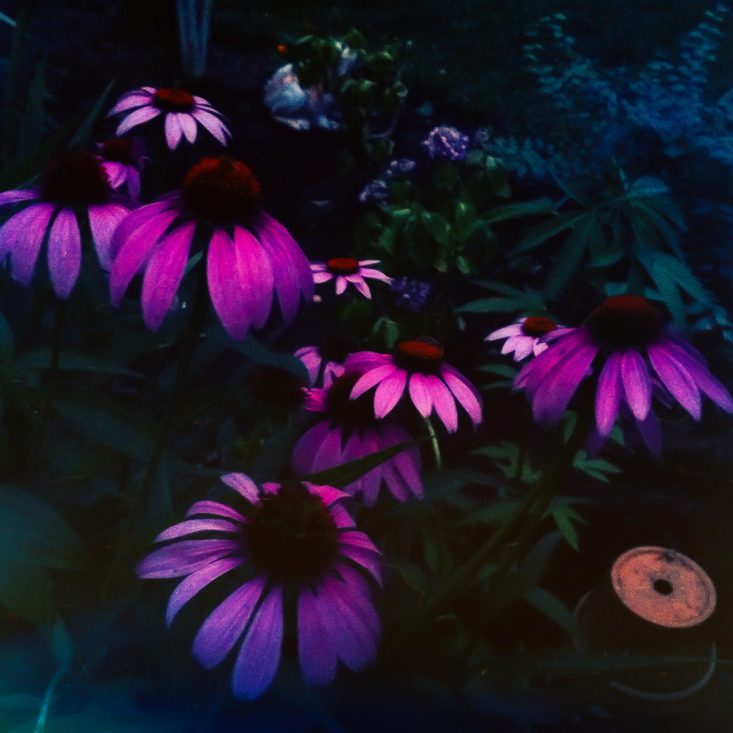 Garden Flowers-11