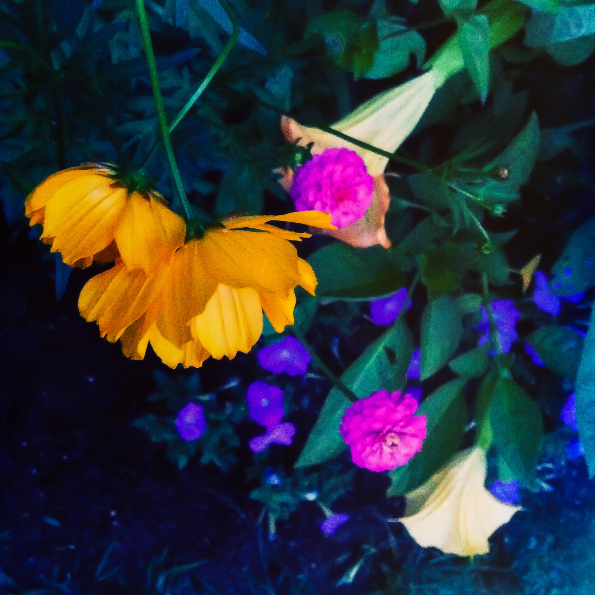 Garden Flowers-7