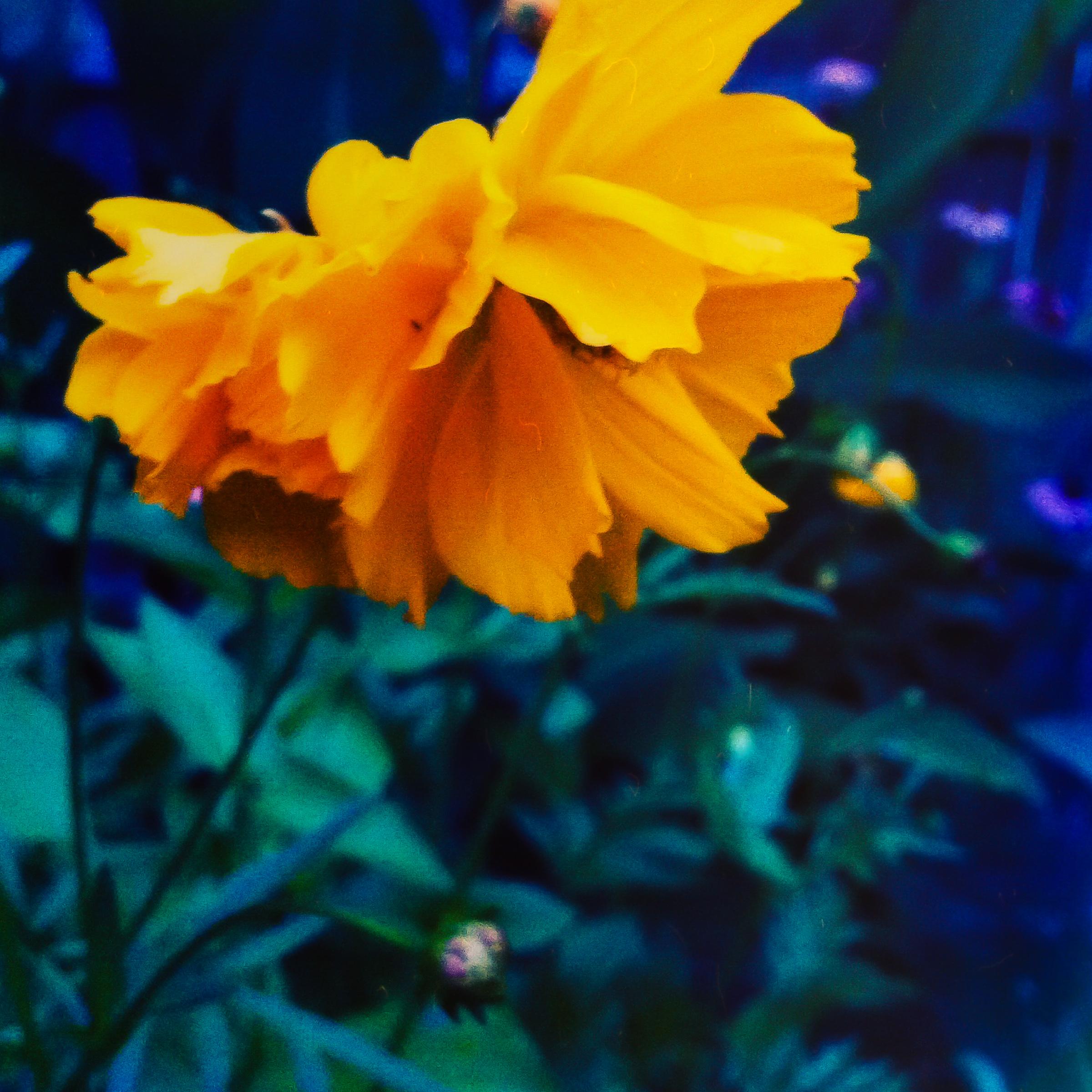 Garden Flowers-5