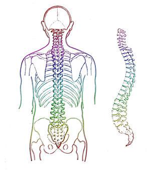 spine-257870_1920.jpg