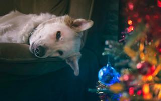 Christmas Shut Down 2018