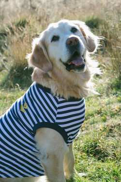 Breton With Yellow / X-Large