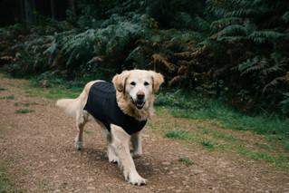 Sötnos Dogwear
