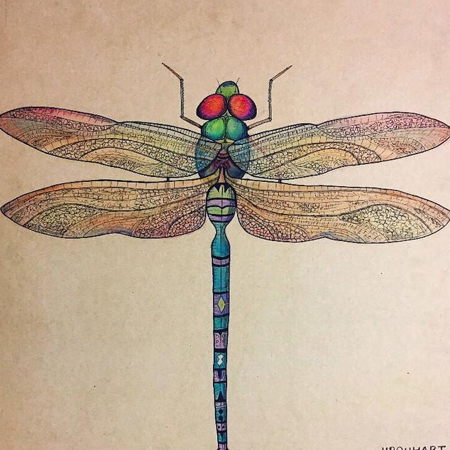 dragonfly_edited.jpg