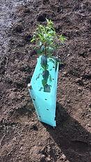 Planta Luengo.jpg