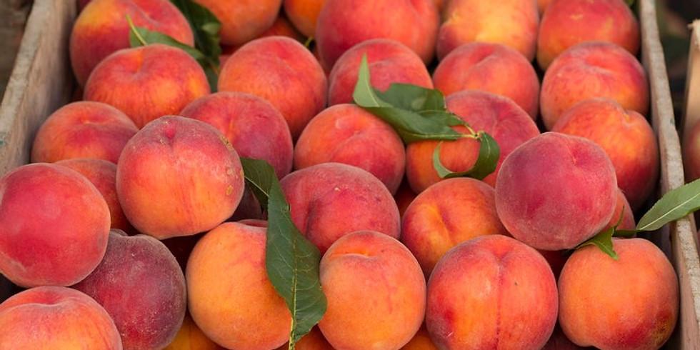The Porter Peach Experience