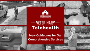 Veterinary Telehealth: New Guidelines for Our Comprehensive Services