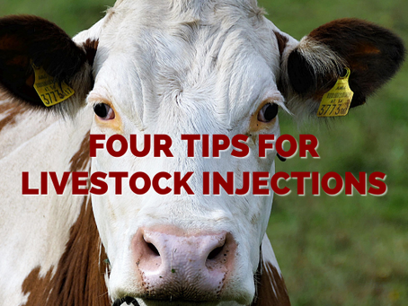 Four Tips for Livestock Injections
