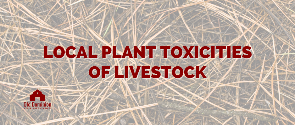 Local Plant Toxicities of Livestock