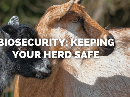 Biosecurity: Keeping Your Herd Safe