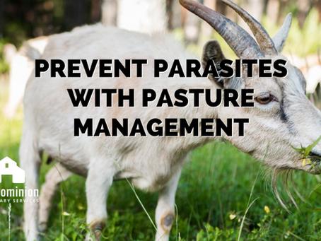 Prevent Parasites With Pasture Management