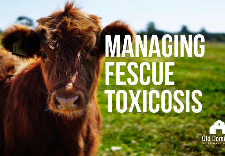 Managing Fescue Toxicosis