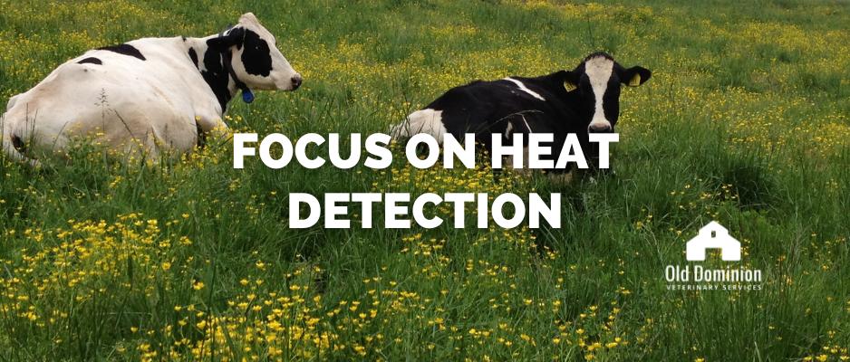 Focus on Heat Detection