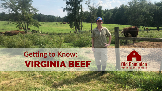 Getting to Know: Virginia Beef