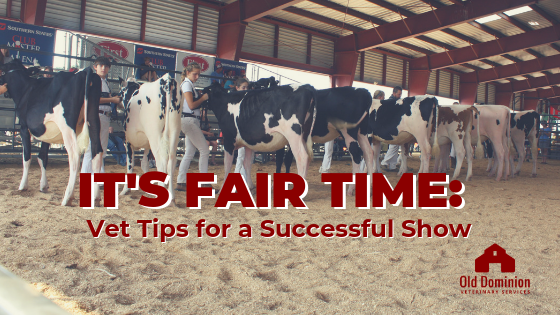 It's Fair Time: Vet Tips for a Successful Show