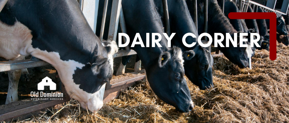 Dairy Corner: Focus on Water