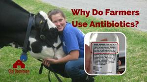 why do farmers use antibiotics