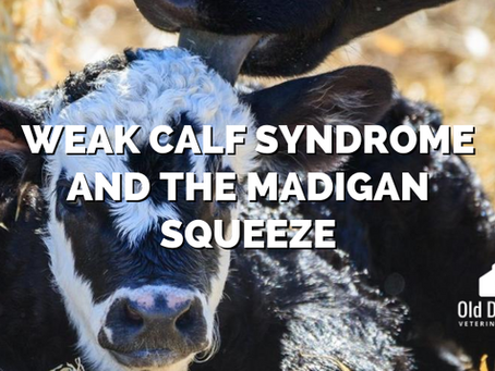 Weak Calf Syndrome and the Madigan Squeeze