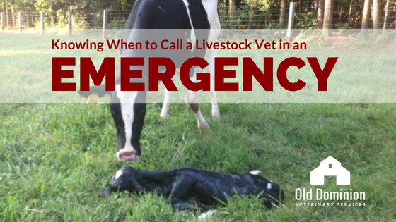 Knowing When to Call a Livestock Vet in an Emergency