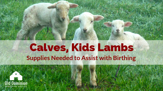 Calves, Kids and Lambs: Supplies Needed to Assist with Birthing