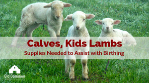 calves, lambs and kids. supplies needed to help with birthing