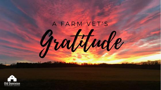 A Farm Vet's Gratitude