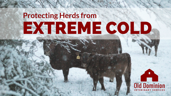 Protecting Herds from Extreme Cold