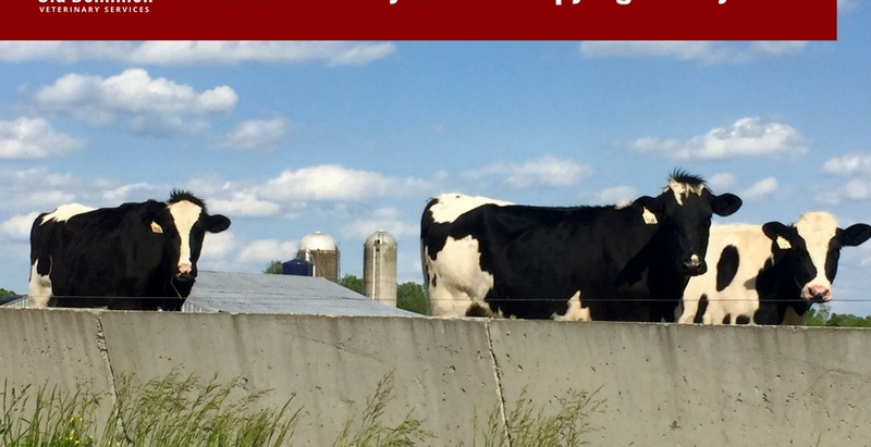 Is Selective Dry Cow Therapy right for you?