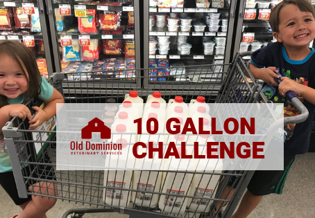 #10GallonChallenge Supports Dairy Farms and Food Banks