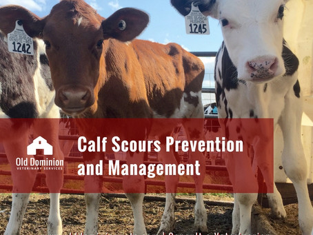Calf Scours Prevention and Management