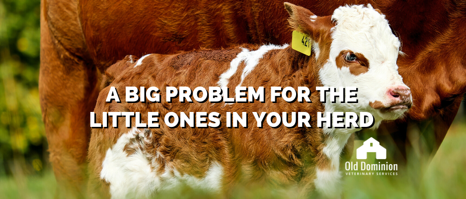 Scours: A Big Problem for the Little Ones in Your Herd