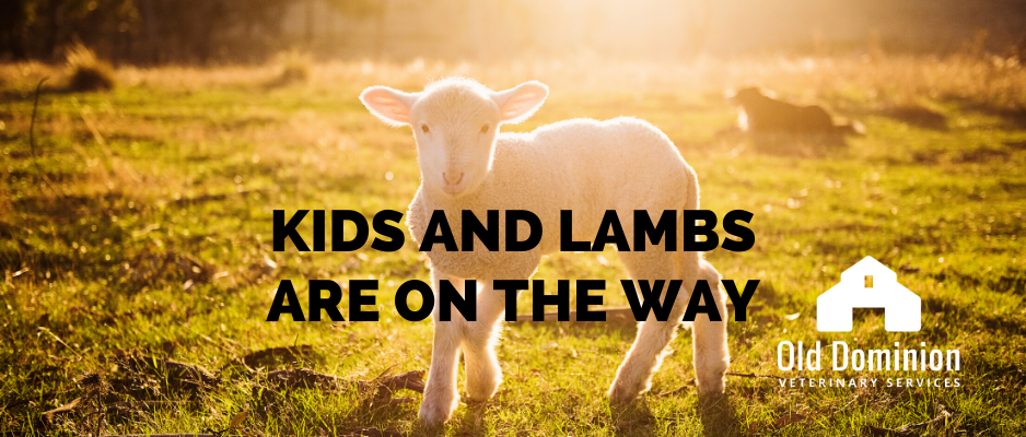Kids and Lambs Are on the Way