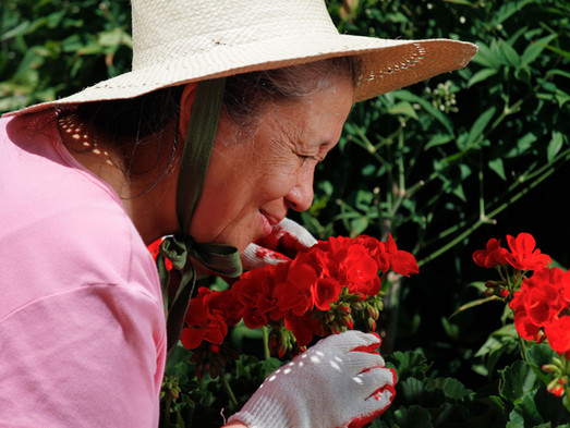 The Link Between Smells, Emotions, and Alzheimer's Disease