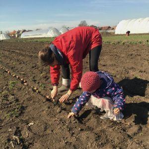Anya - lánya burgonyavetés / Planting potatoes - mother and daughter
