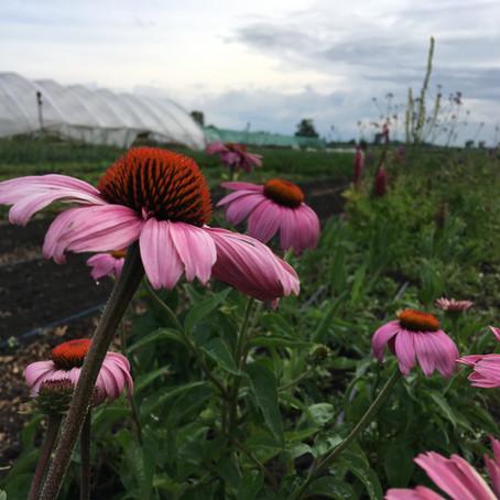 Az ökológiai gazdálkodás és az Európai Unió / The Organic Farming and The European Union