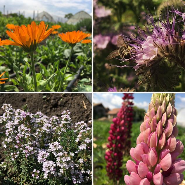 Virágzó gazdaság / Blooming garden