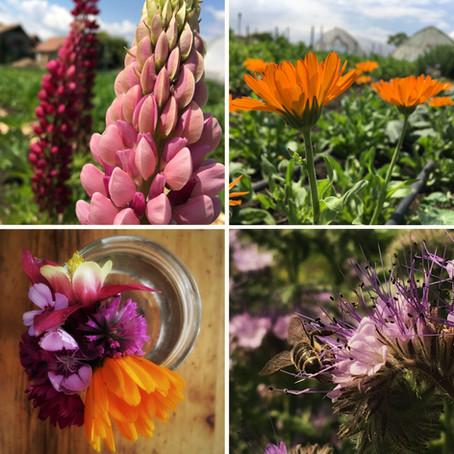 A virágzó gazdaság / The Blooming Farm