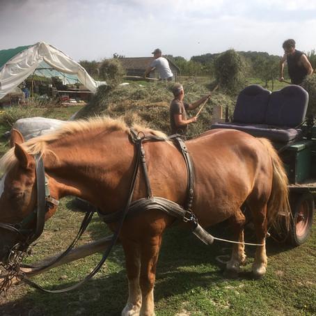 Szénabetakarítás / Harvesting Hay