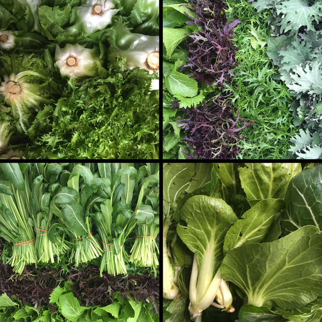 Téli zöldek / Wintery Greens