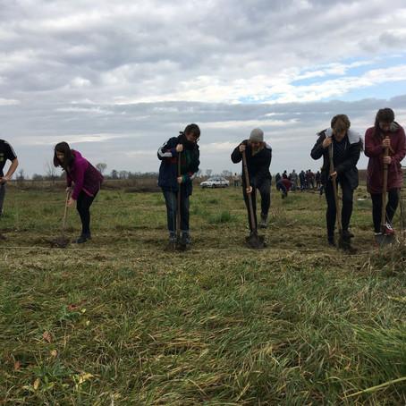 A faültetés napja / The Treeplanting Day