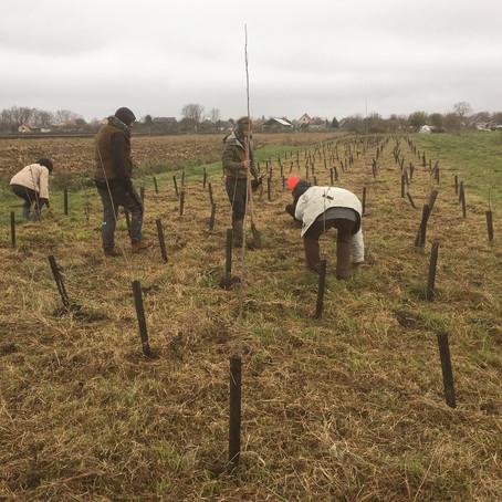 Faültetés 2. rész / Planting Trees 2nd Edition