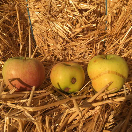 About The Apples