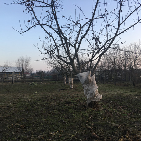 Vetésforgó-tervezés és Fakéreg / Crop Rotation Plan and Tree Bark