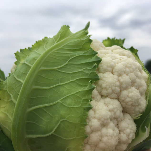 Karfiol / Cauliflower