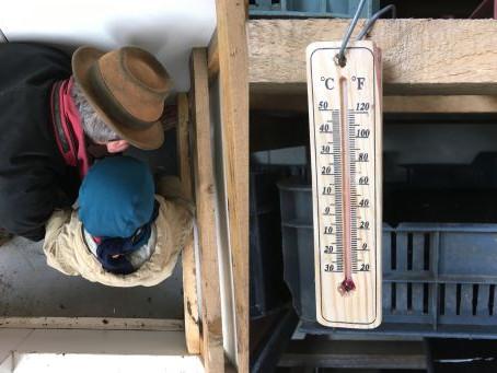 Hűtőházból melegház / From Fridge to Propagation Greenhouse
