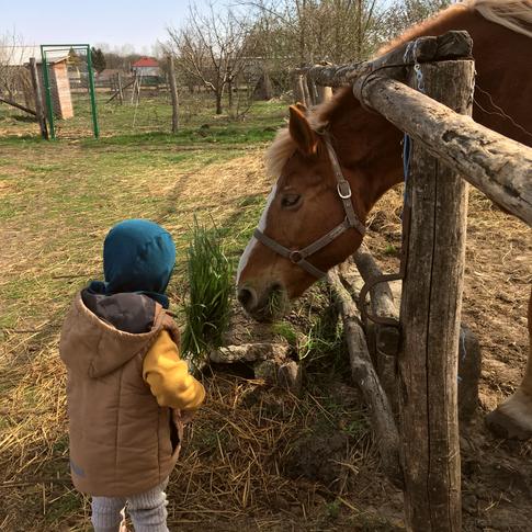 Etetjük Sárit / We are feeding Sari