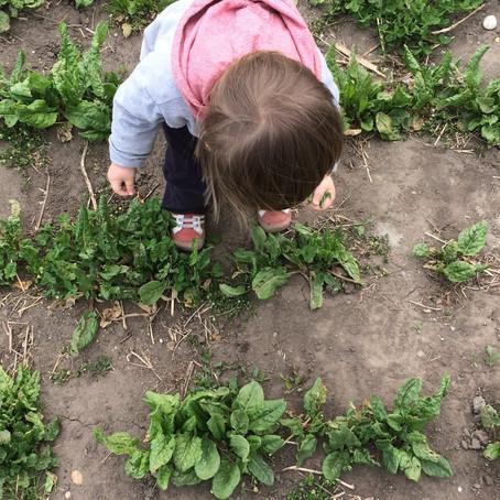 Elkap a tavaszi lendület / Carried away by the Dynamism of Spring