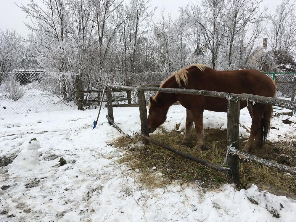Sári télen